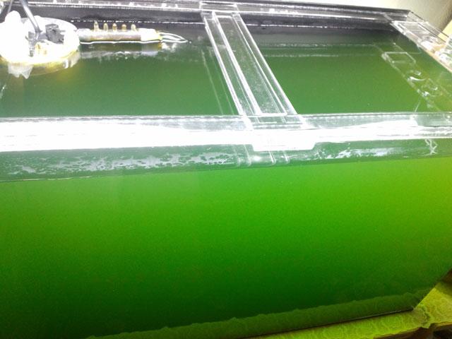 作り方 の グリーン ウォーター